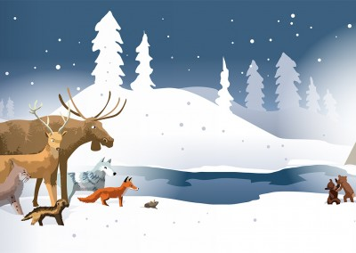 Forest Animals Illustration Ola Gustafsson